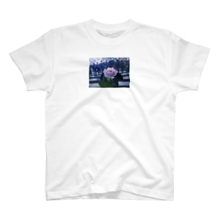 my rose T-shirts