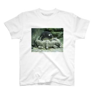 ペンギンT T-shirts