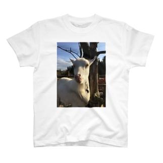 舌なめずりヤギ T-shirts