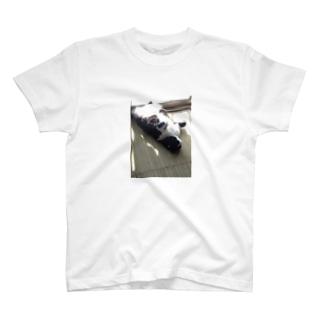 猫の日向ぼっこ T-shirts