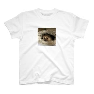 まゆげちゃん T-shirts