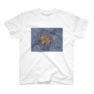kittanee T-shirts