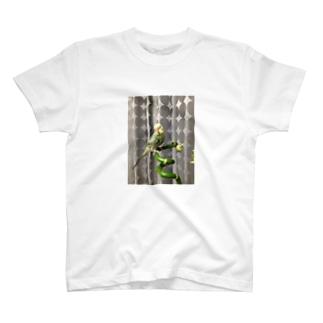 ピコちゃん(性別不明期) T-shirts