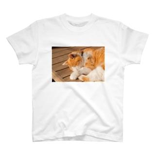 鎌倉の猫 T-shirts