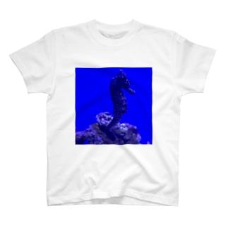 Seahorse  〜タツノオトシゴ〜 T-shirts