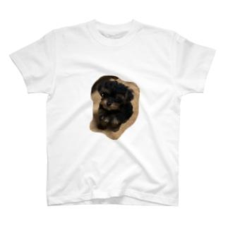 おすわりころちゃん T-shirts