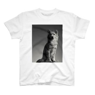🐾ヤスオ T-shirts
