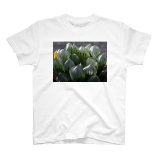 多肉植物 ハオルチア T-shirts