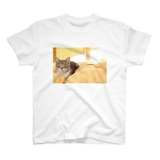cat_20181116_0681' T-shirts
