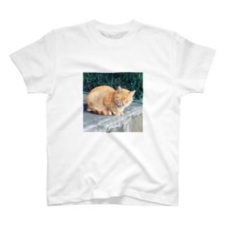 きなこ猫、ネムネム T-shirts