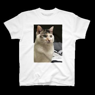PDR Sucksのこいつはもうダメだ。。。 Tシャツ