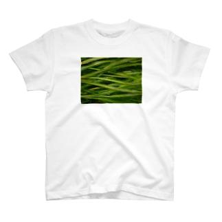 水草:ぽたもげとん T-shirts