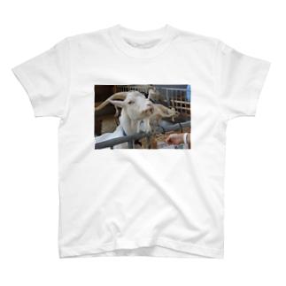 Eat, Sleep and Perform T-shirts