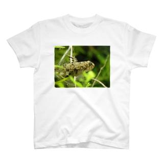 ヒナハゼその2 T-shirts