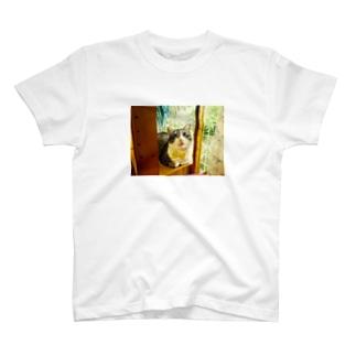 窓辺のマァ坊 T-shirts