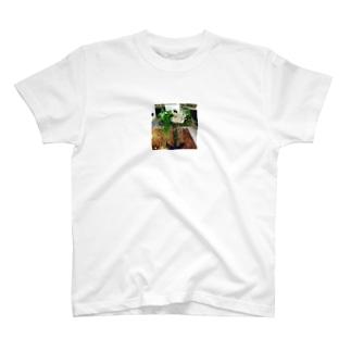 アレンジメント T-shirts