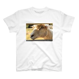 Peeping T-shirts