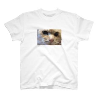 被災猫キマリ T-shirts