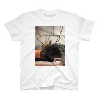 おチビ(ミシシッピニオイガメ) T-shirts