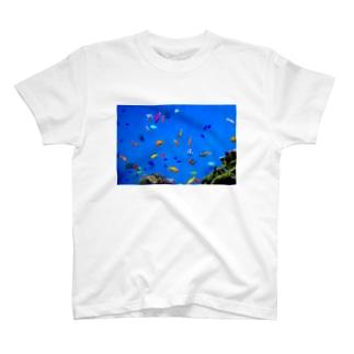 さかな T-shirts
