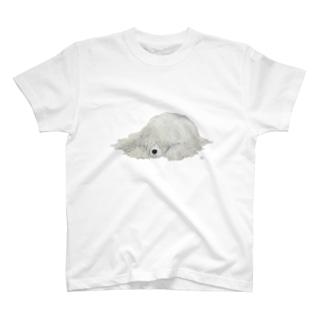 コモンドール T-shirts