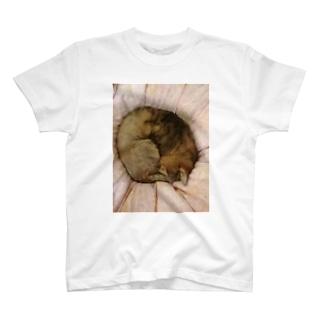 家の猫アンモナイト型 T-shirts