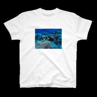 Androgyne Blumenのクマノミ T-shirts