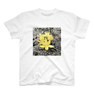 ちょこせらん家のクロッカス T-shirts