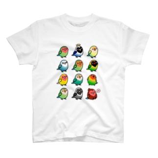 【両面】Chubby Bird(背面)コザクラインコ ルチノー (表)ラブバード大集合 (コザクラインコ&ボタンインコ) Tシャツ