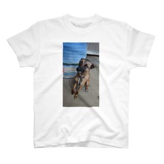 嬉しいセレガちゃん T-shirts
