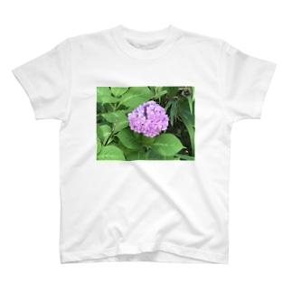 健気に咲き乱れる紫陽花 T-shirts