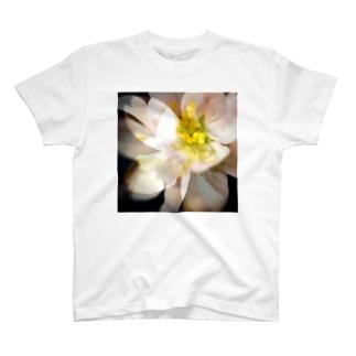 桜咲く T-shirts