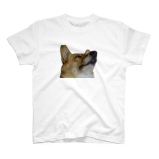犬の寝顔 T-shirts