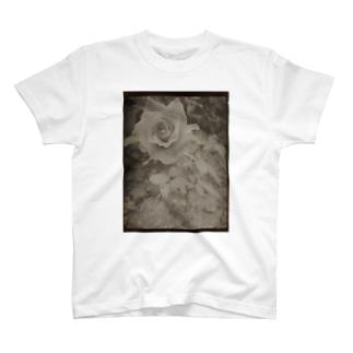 季節はずれに咲く T-shirts