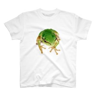 リアルアマガエル T-Shirt