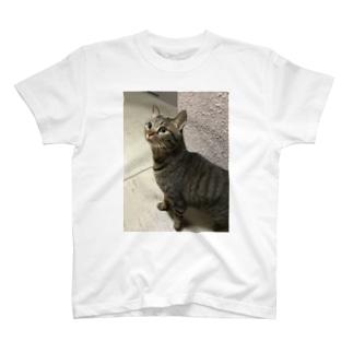 どうしたみぃにゃん T-shirts