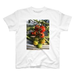 有機減農薬トマト T-shirts
