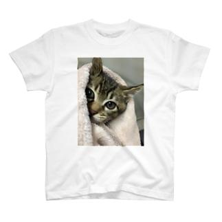 覗き見ひゃん T-shirts