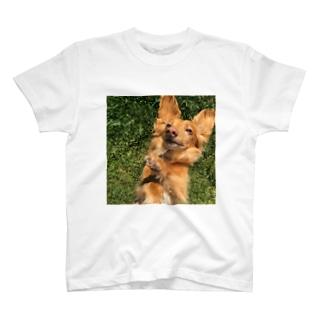 Shinくん T-shirts