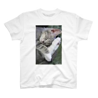 cat_20190227_8341  T-shirts