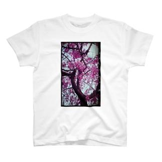 花)桜ヴィンテージ T-shirts