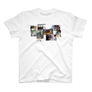 一匹猫じゃない T-shirts