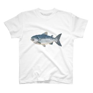 dotどっと〜鮭〜 T-shirts