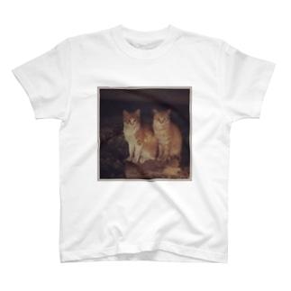 猫のiPhoneケース T-shirts