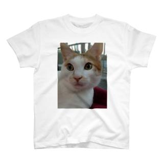 てんちゃん T-shirts