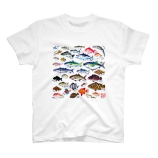 魚図鑑*Tシャツ T-shirts