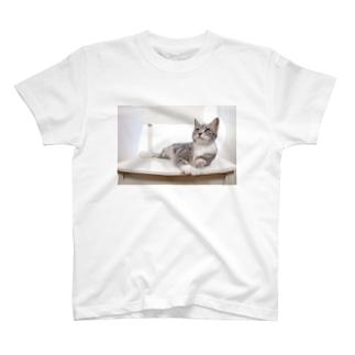cat_20190506_8165 T-shirts
