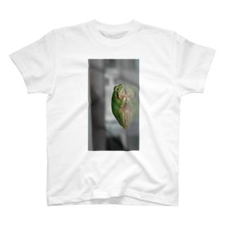 カエルさんの横顔 T-shirts