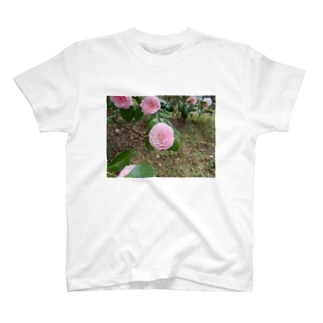 Pale pink camelia blooming カメリア T-shirts