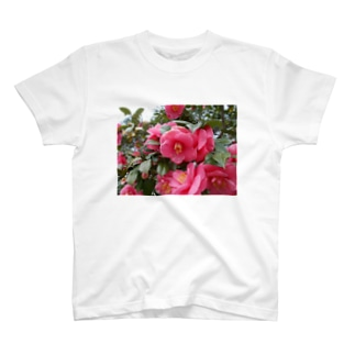 Pink camelia blooming カメリア T-shirts